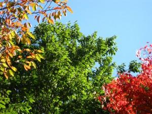 Canon PowerShot A1000 IS で撮影した、福島県立図書館裏の木々