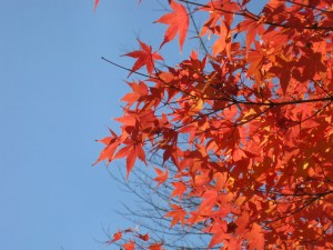 まだいたるところに秋は残っています。