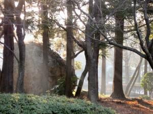 朝もや。2009-01-19 撮影