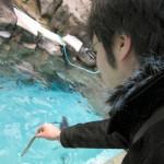 ペンギンへの餌やりに挑戦している僕です。水面から結構高さがあり、上手にあげるのは難しいです。
