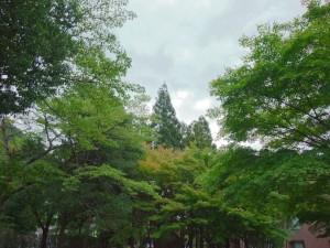 DR800 を使用した写真。このブログの 7 月 30 日の写真と比べてみてください。空の臨場感は残念ですし、若干の白トビは残っていますが、真夏の眩しい曇り空で林の陰から雲の色合いまで必死に写真に収めてくれる F200EXR には感謝しています。