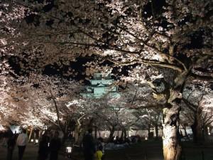 鶴ヶ城の夜桜。