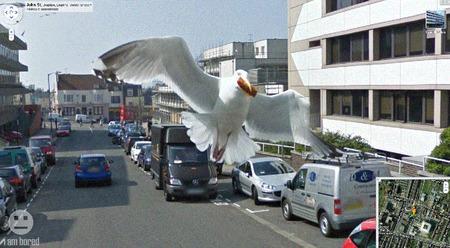 1185_googlestreetviewbird.jpg