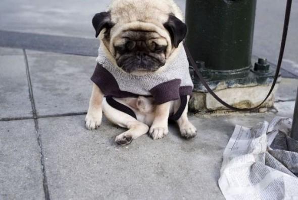 47-sad-dog03-590x397.jpg