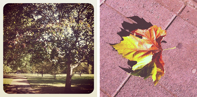 autumn-instagram.jpg