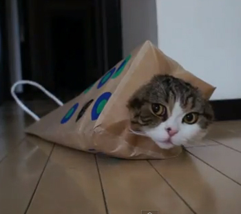 maru-the-catt.jpg
