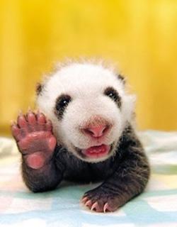 panda-waving-goodbye.jpg