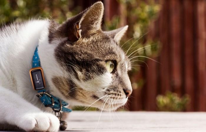 pet-wearables-GPS