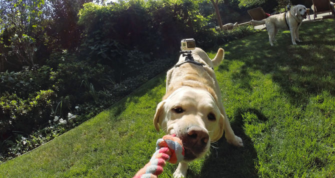 pet-wearables-go-pro-fetch