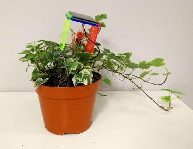 plant with sensor