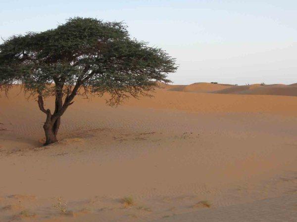 Мавритания. Полезные ископаемые