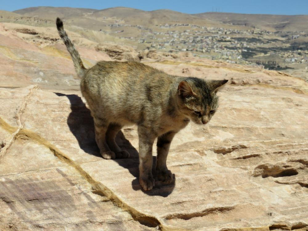 Doen in Jordanië