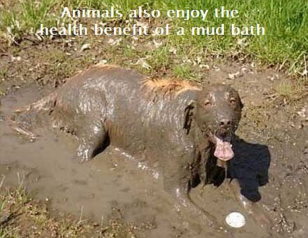 Image result for bentonite clay pets