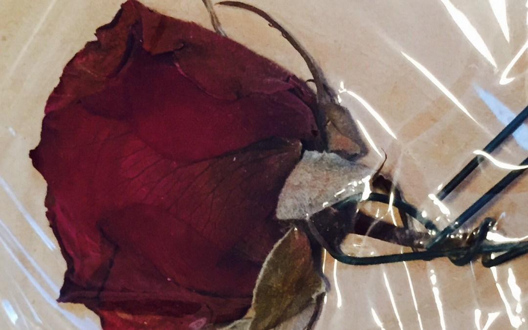 The Red, Red Rose of Memory: A Surprise Update