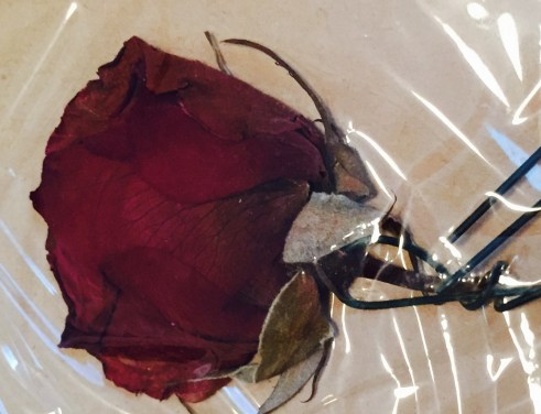 Red rose preserved in scrapbook from Spring Banquet, 1967
