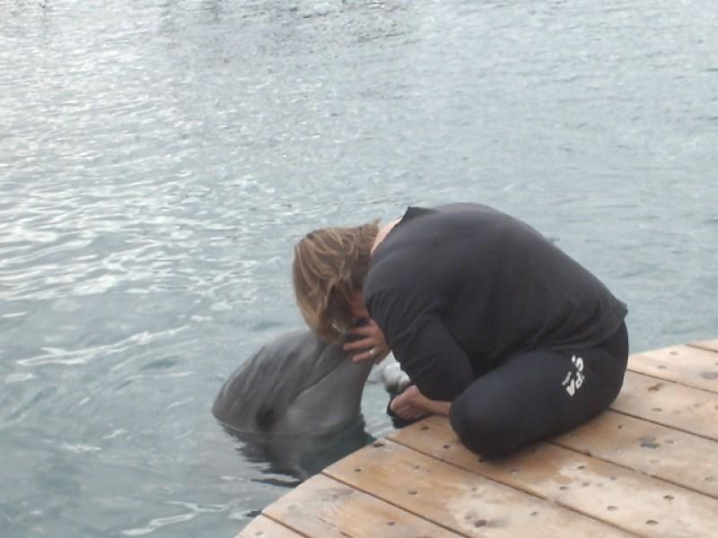 ריף הדולפינים - מה יש לעשות באילת
