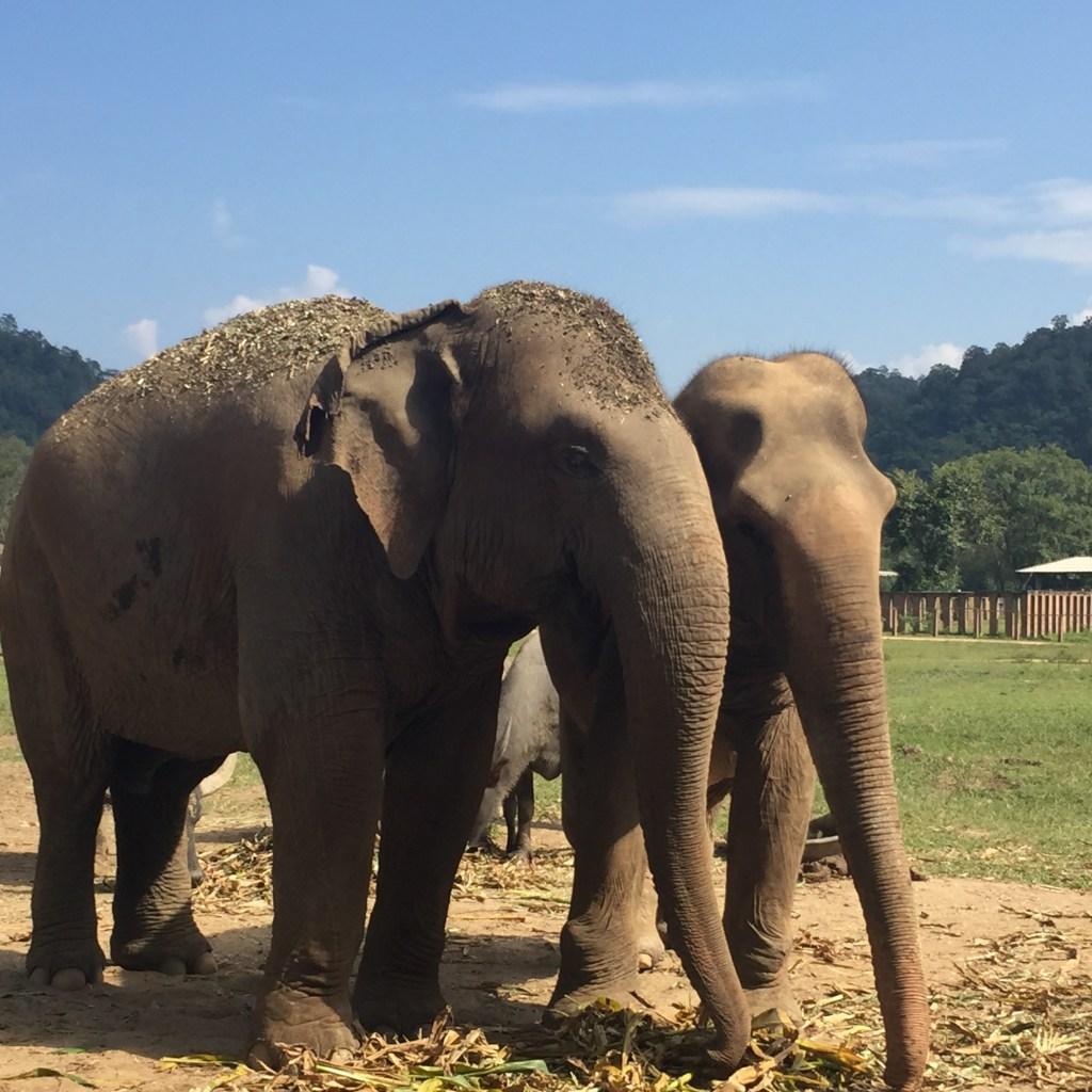חוות פילים בתאילנד