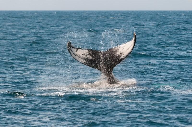 לווייתנים - כביש 1 בקליפורניה
