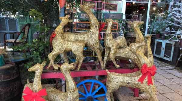 סיורי בוקר וערב חגיגיים לקראת חג המולד בחיפה