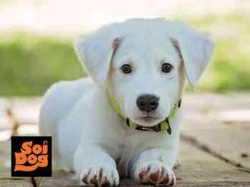 บริจาคช่วยสุนัขในมูลนิธิเพื่อสุนัขในซอย มิ.ย.63
