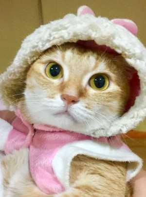 แมวส้มน่ารัก
