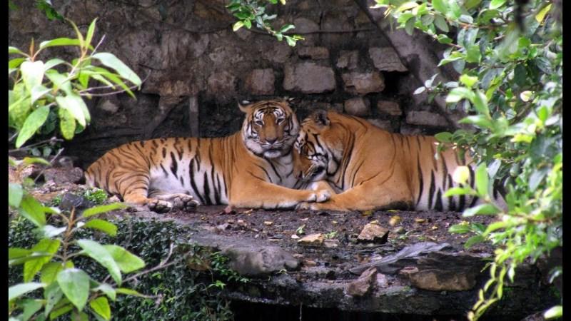 Jungle Safari In Nepal | Shivam Holidays