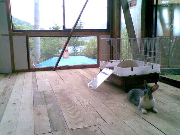 1006ウサギ小屋新築