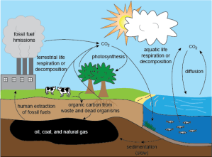 Carbon Cycle  Lessons  Tes Teach