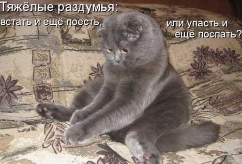 Смешные коты — фото с надписями | Шмяндекс.ру