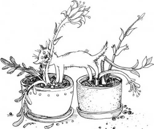 Смешные кошки рисованные картинки Шмяндексру