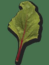 Beet leaf on Shockingly Delicious