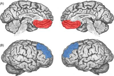 The Functional Neuroanatomy of Depression (1/2)