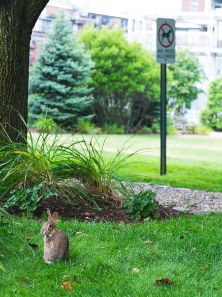 lapin parc boston