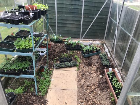 saving money in the garden