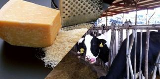 日欧EPA大枠合意 チーズ