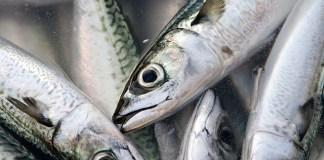 日本水産 扱い魚種の資源状態調査