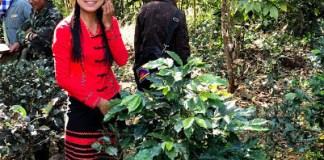 ミャンマーの農園(海の向こうコーヒー 坂の途中)