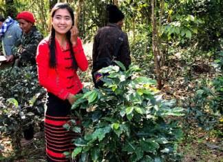 ミャンマーの農園(海の向こうコーヒー 坂ノ途中)