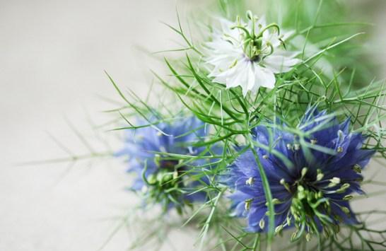 4月21日の誕生花と花言葉です。 - とことこ湘南