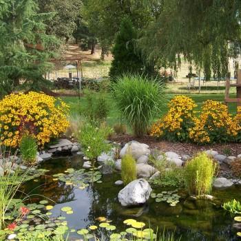 Pond (3)