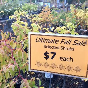 fall-sale-5