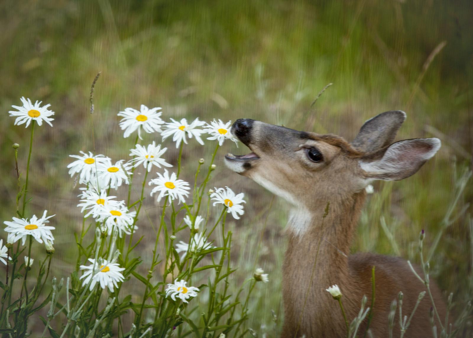 Deer resistant plants shonnards izmirmasajfo