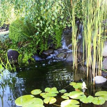 pond-blog