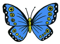 How To Draw A Beautiful Butterfly Shoo Rayner Author