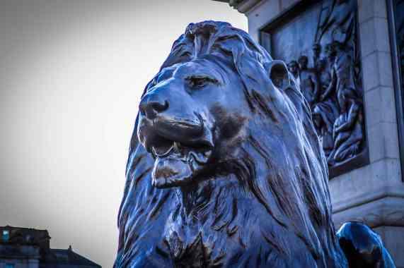 Nelson's Column Lion