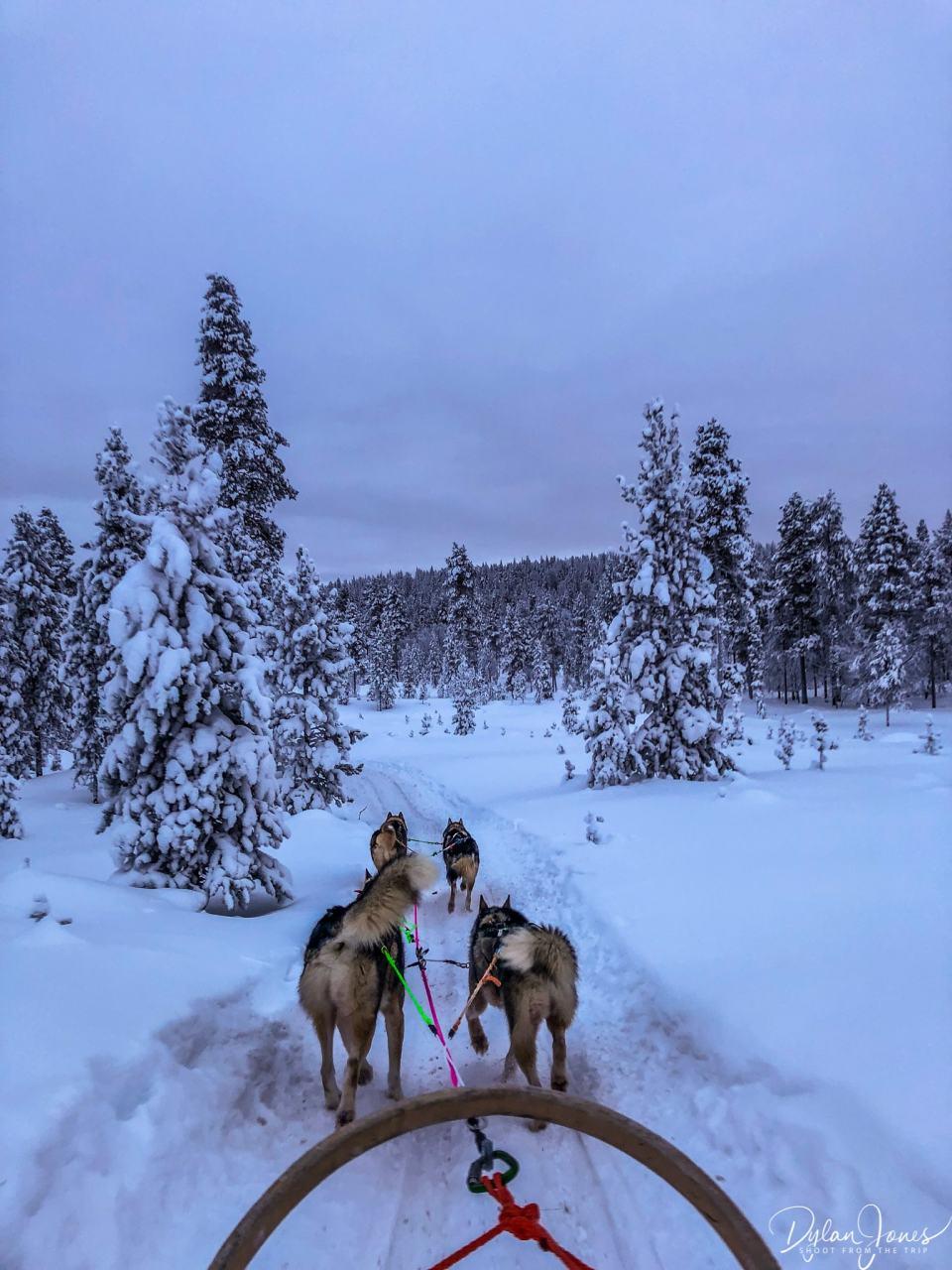 Husky Safari at the Northern Lights Village Saariselka