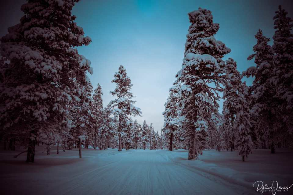 Exploring the forests of the Northern Lights Village
