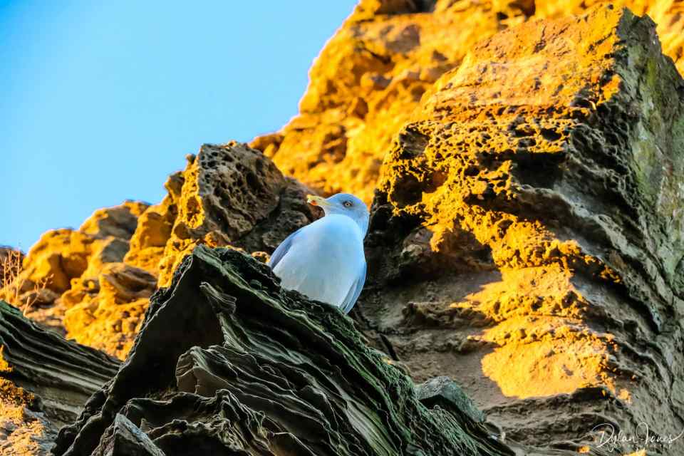 A seagull resting on the cliff