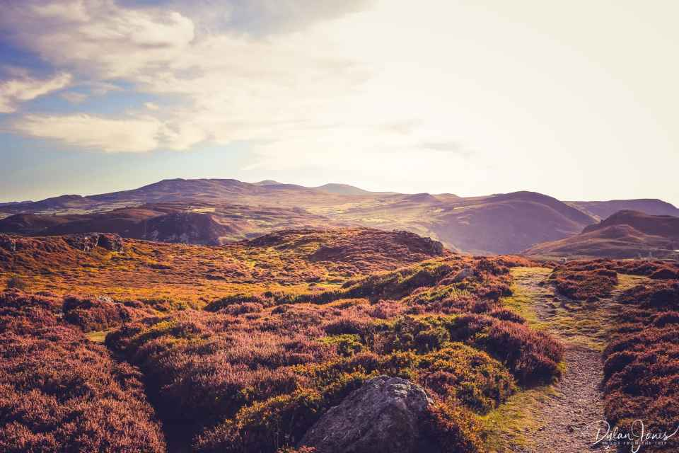 Heather covered moorland and the Carneddau Mountains