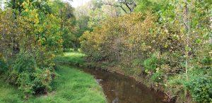 Fall foliage in Virginia
